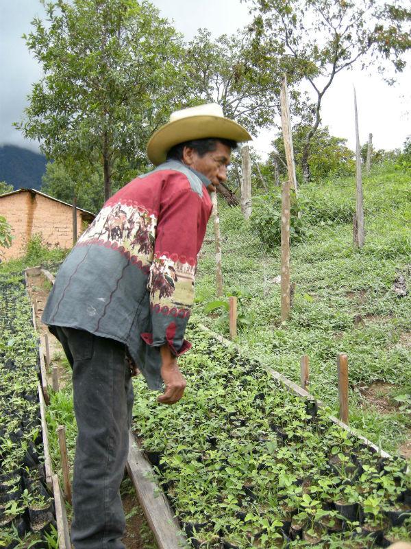 Mexikan pa plantskola 2012