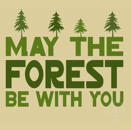 May the forest be with you pic