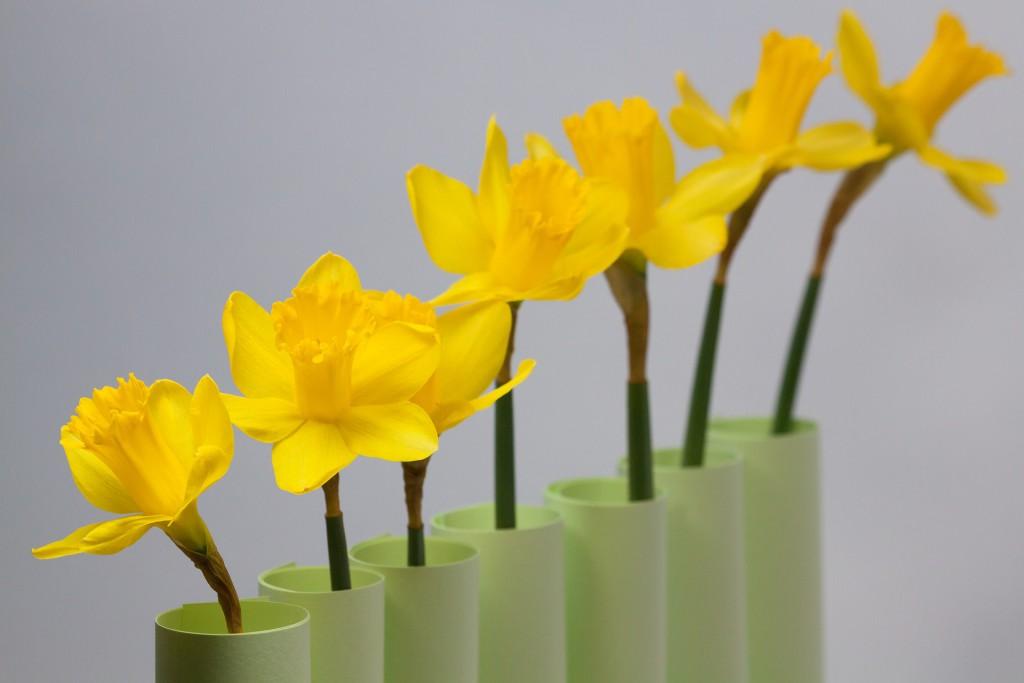 daffodil-1160922_1920