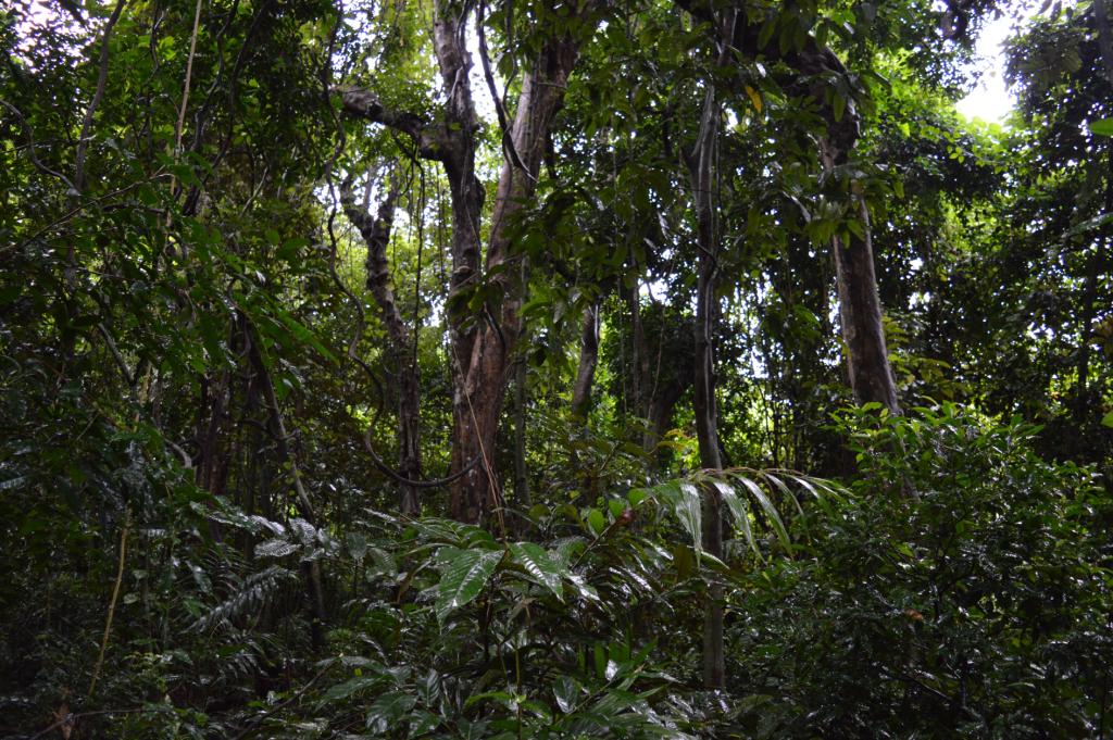 virgin undisturbed forest