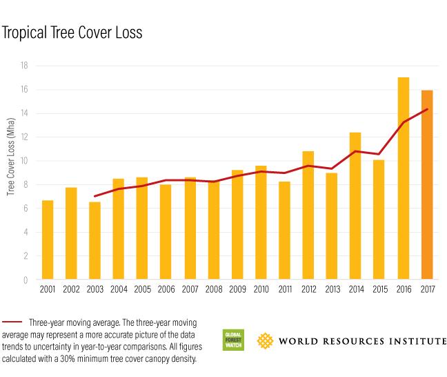 tropical tree loss